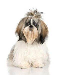 Grooming Long Haired Dogs Dog Grooming Tutorial