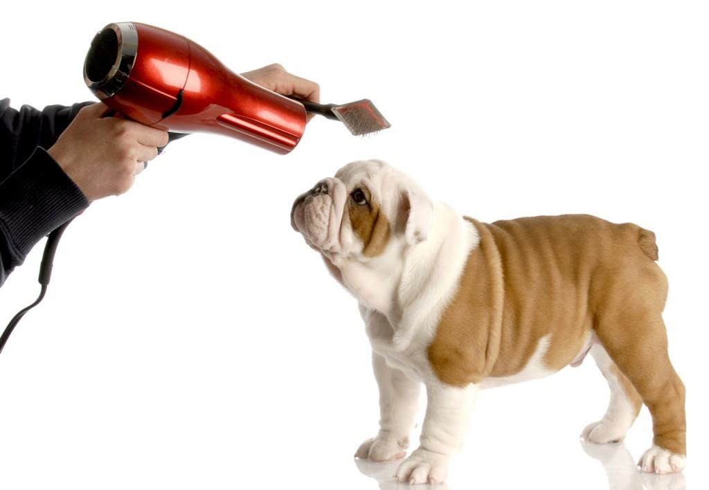 Dog Grooming Techniques Videos