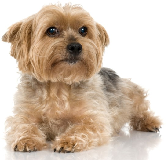 How To Choose A Groomer Dog Grooming Tutorial