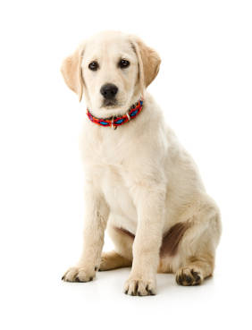 Golden Collar Dog Grooming