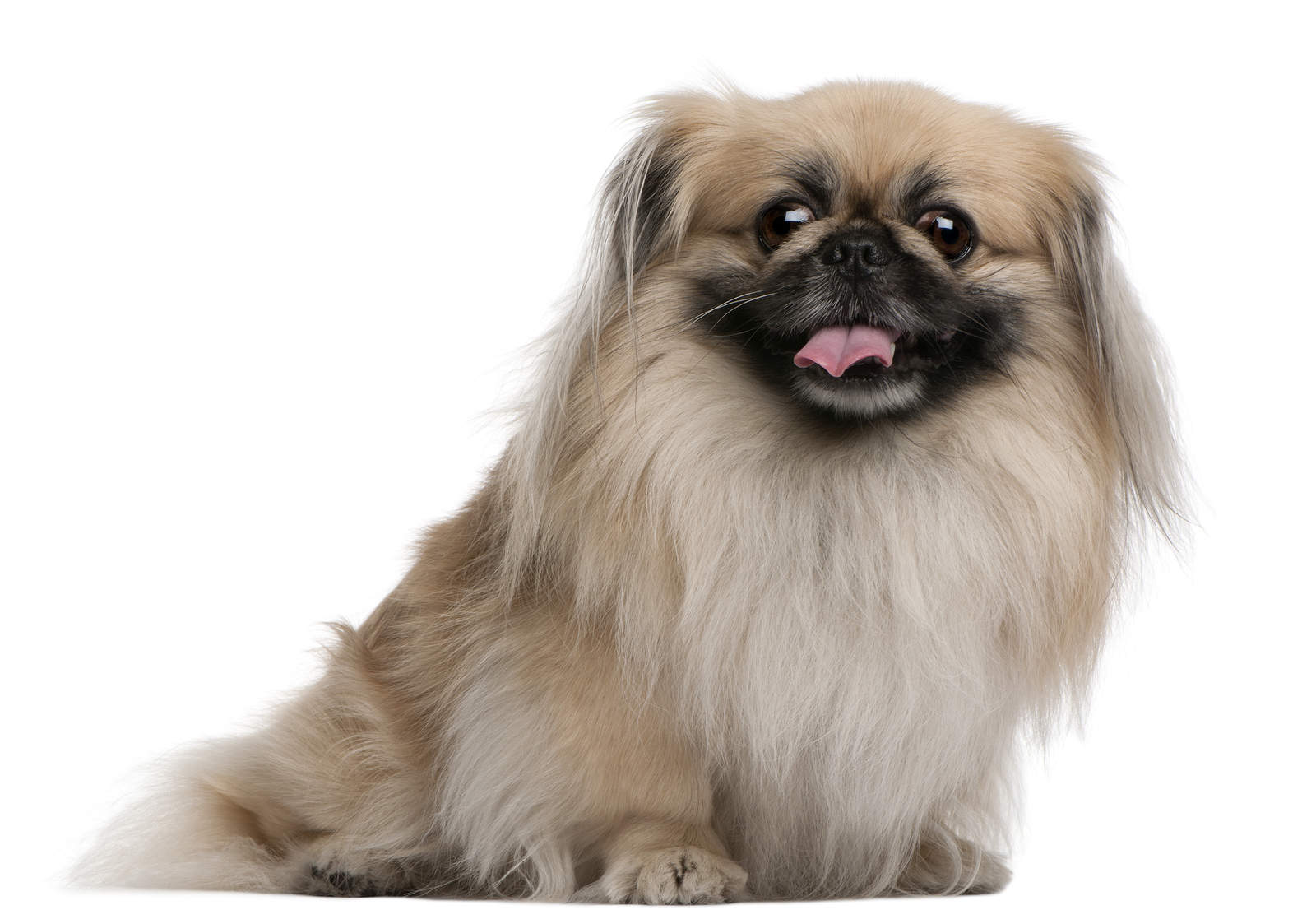 coat-care-for-your-pekingese