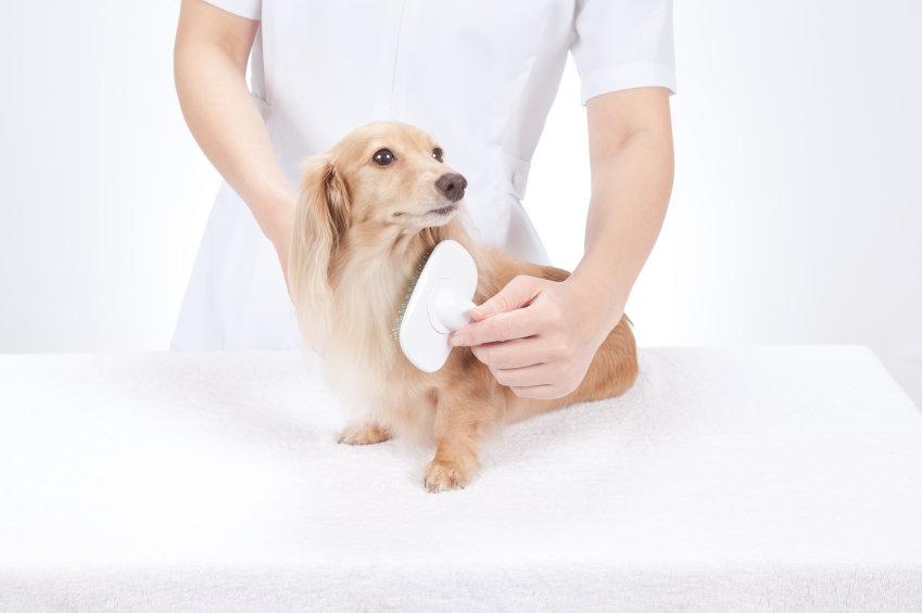 different-grooming-methods