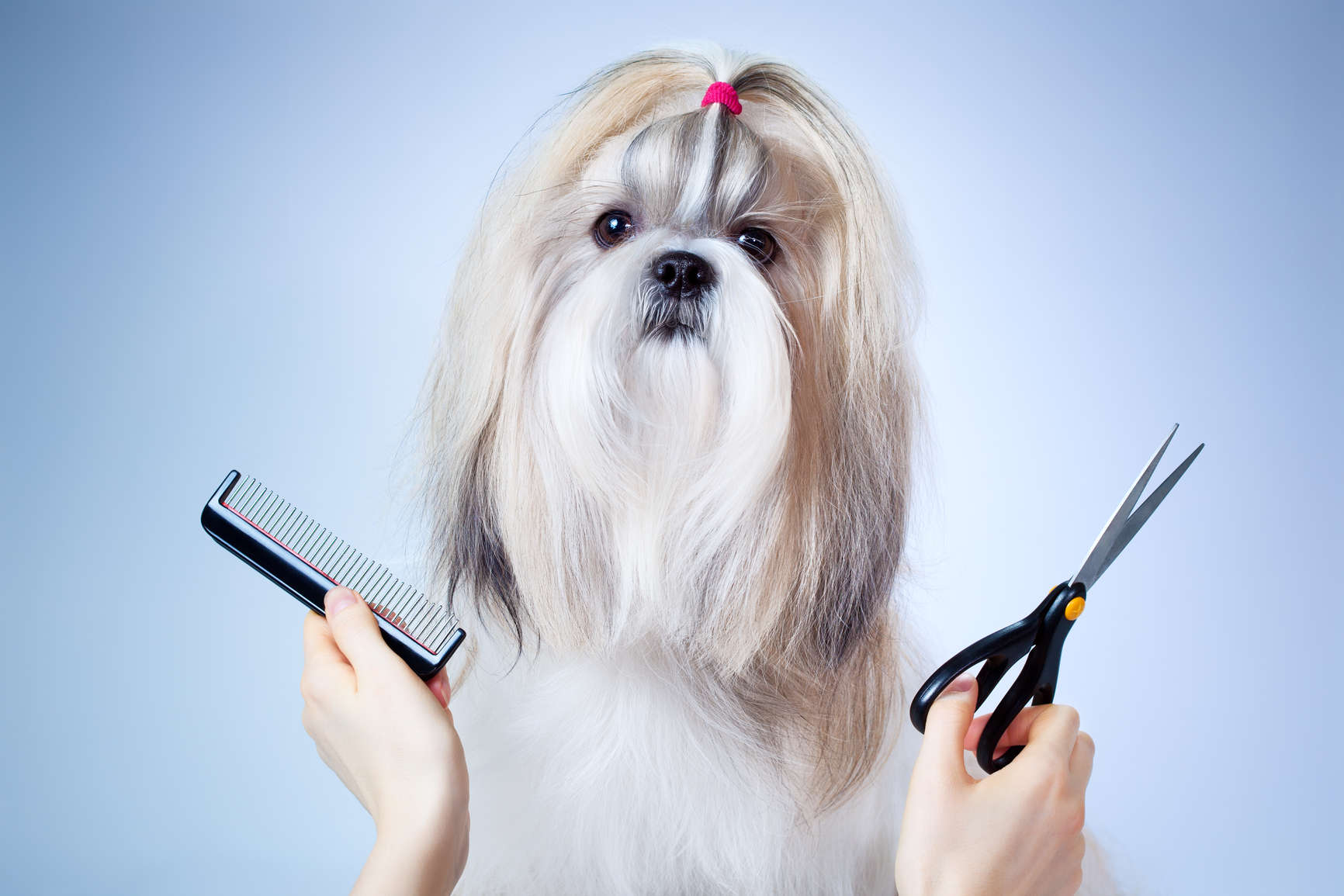 how-to-avoid-common-dog-grooming-difficulties