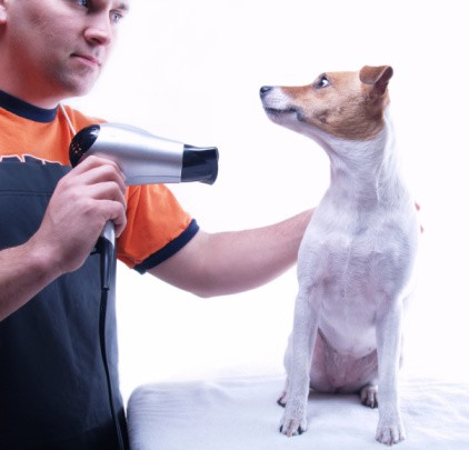 dealing-with-different-injuries-while-grooming